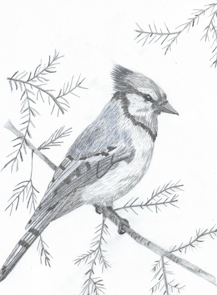 BlueJay save for pyrography pattern