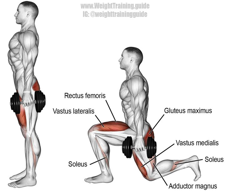Dumbbell rear lunge. A compound unilateral exercise. Target muscles: Gluteus Maximus and Quadriceps (Vastus Lateralis, Vastus Medialis, Vastus Intermedius, and Rectus Femoris). Synergistic muscles: Adductor Magnus and Soleus. Dynamic stabilizers (not highlighted): Hamstrings and Gastrocnemius. Visit site to learn proper form and knee safety.