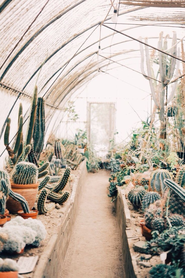 green thumb | cactus greenhouse