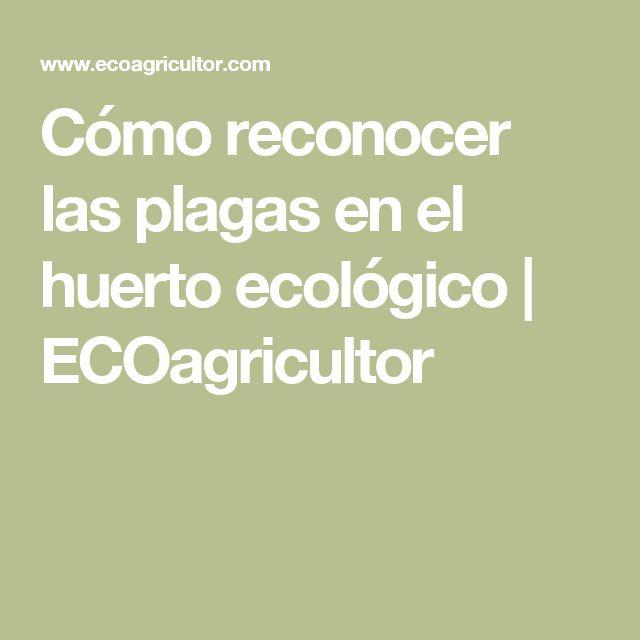 Cómo reconocer las plagas en el huerto ecológico   ECOagricultor