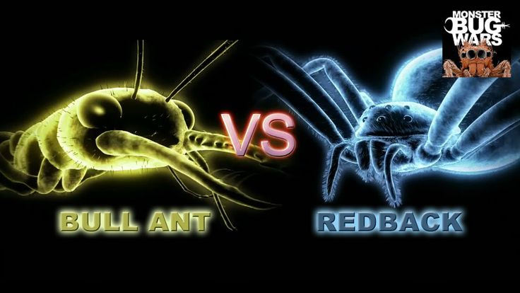 MONSTER BUG WARS | Bull Ant Vs Redback Spider