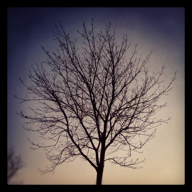 Naked tree as winter begins