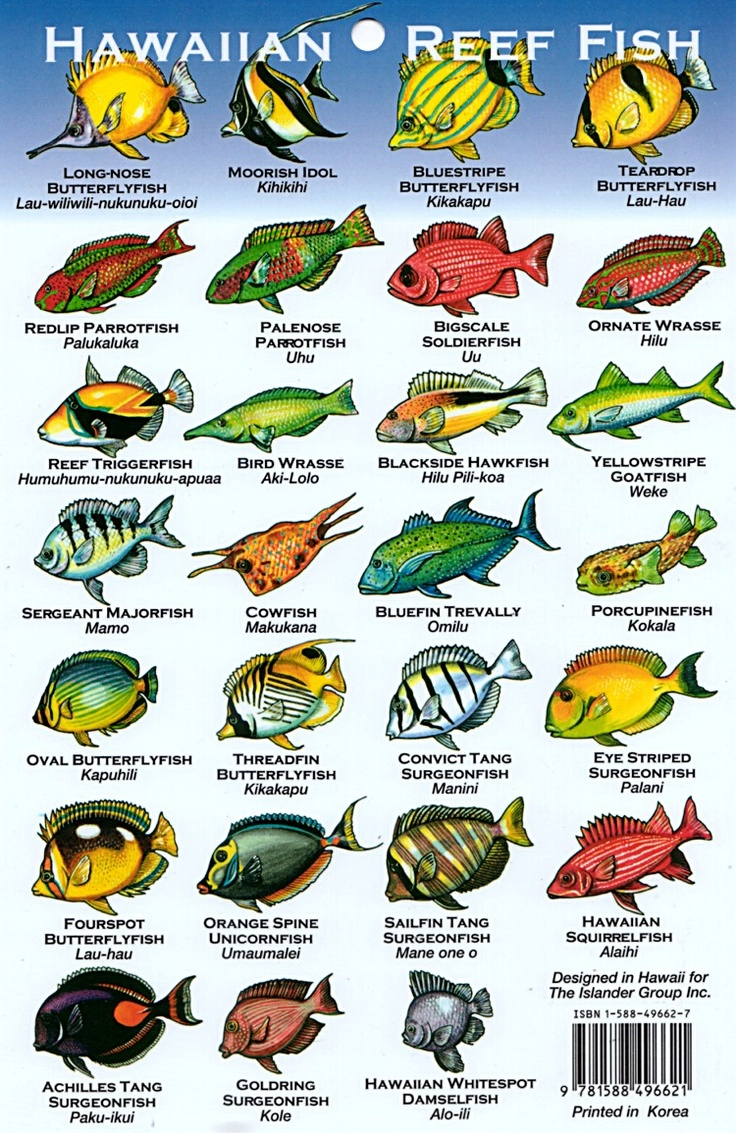 422 best hawaii aloha images on pinterest destinations hawaii reef fish nvjuhfo Image collections