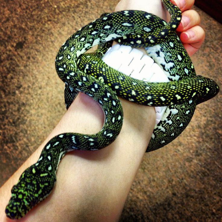 Baby diamond python