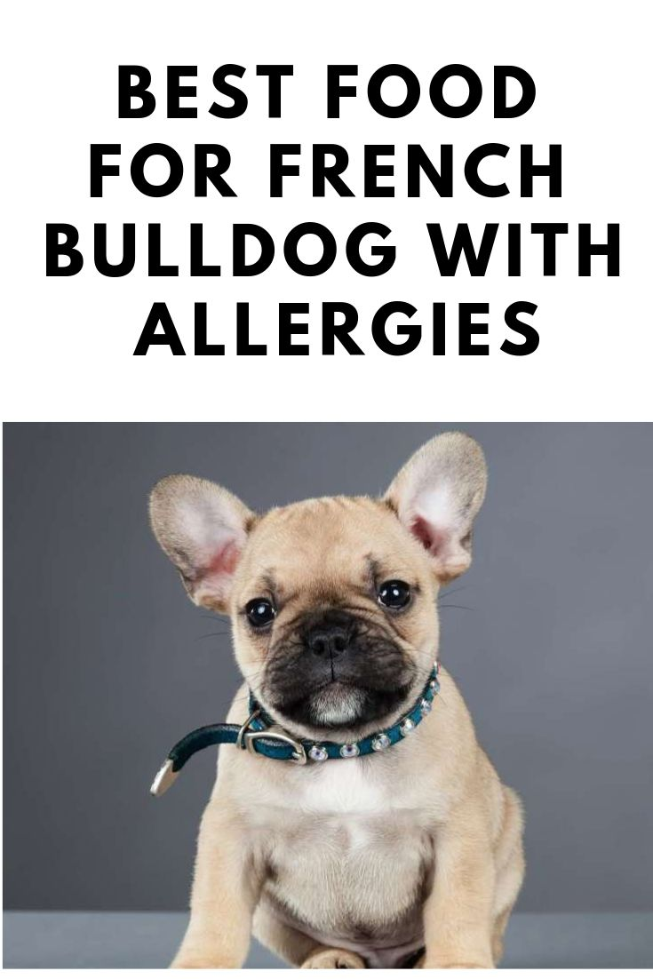 Best food for french bulldog with allergies french