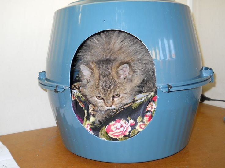 35 Best Make A Cat Tent Images On Pinterest Cat Tent Animals And Cat Furniture