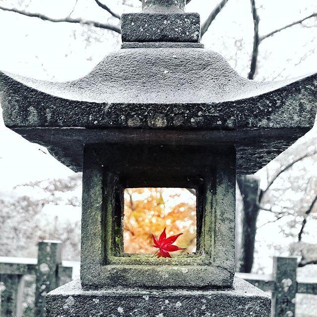 秋を燈す。  #蟷螂 #螳螂 #灯篭 #燈篭 #灯籠 #燈籠 #とうろう #漢字どれが正しいの? #秋 #紅葉 #もみじ #かえで #楓 #加工 #画像加工 #寂光院 #犬山 #ライカ #igersjp #ig_japan #icu_japan #bns_japan #lovers_nippon #jp_gallery #team_jp_ #team_jp_モノクロ #team_jp_秋色2016 #tokyocameraclub  #写真好きな人と繋がりたい #関係ないけどゾフォート買いました