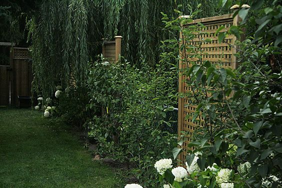 17 best images about ugly fence ideas on pinterest hedges chain link fence and blue morning glory - Garden ideas to hide fence ...