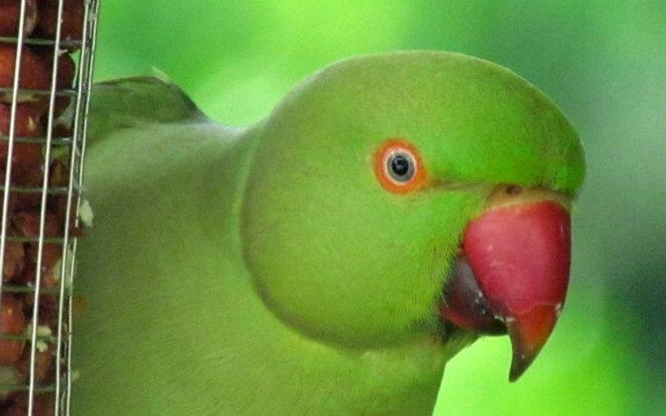 Bowie Parrot Bedtime