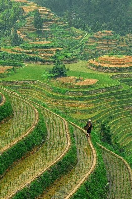 Longshen Rice Terraces in Guilin, China (by Jasper the Roclimbr).  (Source: Flickr / jaspersee)