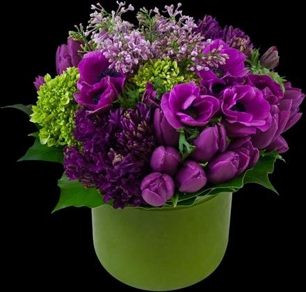 Fuchsia Winter Classic | Winston Flowers