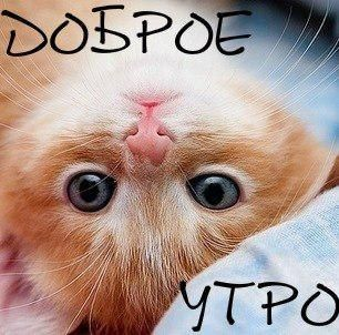 img1.liveinternet.ru images attach c 11 115 848 115848471_dUQuci4nhxM.jpg