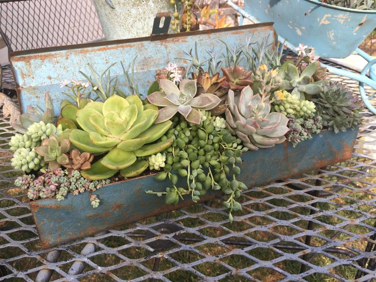 Potted succulents in a vintage toolbox made by Succulent Style — Available for purchase at Seaside Gallery and Goods in Newport Beach, Californ