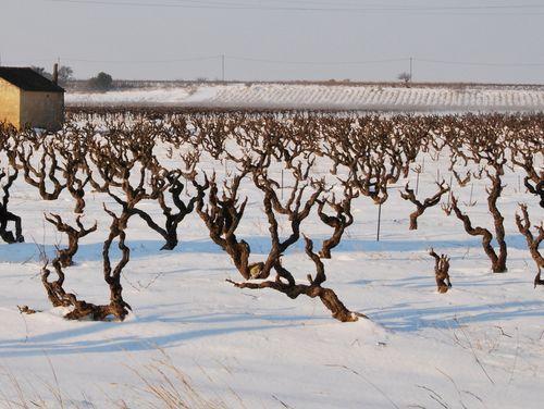 Vineyards in Sainte Cecile-les-Vignes (c) Kristin Espinasse