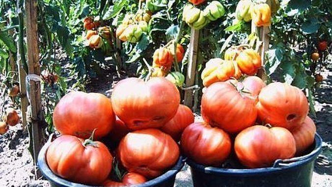 Eco Ruralis a demarat campania de distribuție de semințe gratuite de legume și plante medicinale