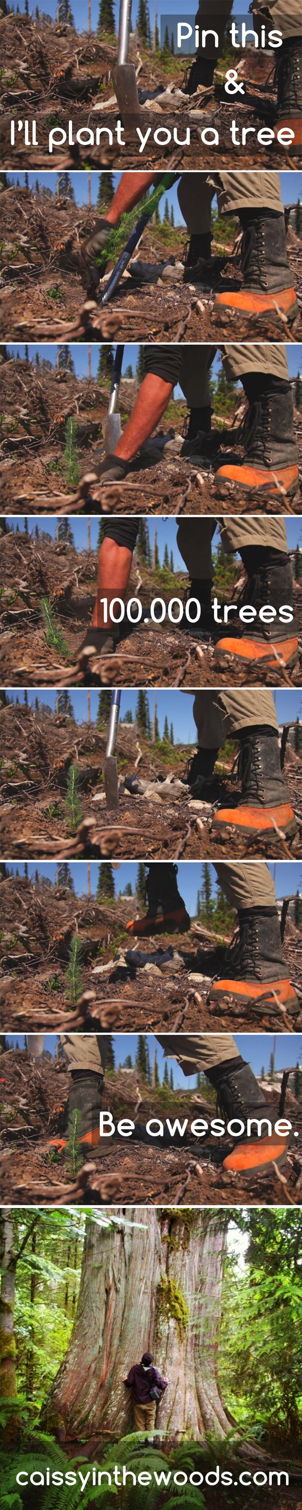 Pin this and I'll plant you a tree! #treeplanting. 100 000 trees to be more exact! #initiative #outdoor #green #soil #nature #tree: Fav Pin, Outdoor Green, Exact, Initials Outdoor, 100 000, 000 Trees, Natural Trees, Green Soil, Illness Plants