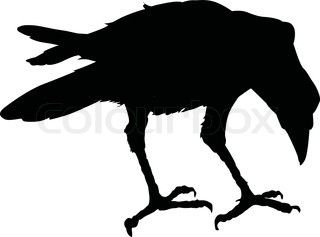 Raven+Pictures+Bird+Silhouette   silhouette ravens on tree isolated
