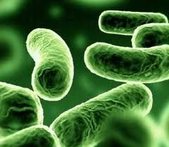 what is pathogens?  Pathogens are disease-causing organisms. They include viruses, protozoa, bacteria and any other micro-organisms that are capable of causing infections. Pathogens can also be referred to as microbes.  For further details visit www.microlifeindia.org