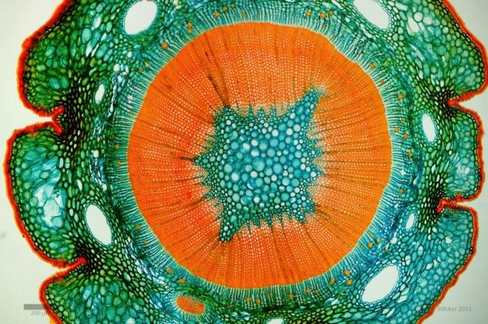 Patternbank were totally in awe when we saw EckhardVölcker's microscopic masterpieces. As he says, we are surrounded by another world that is hidden to th