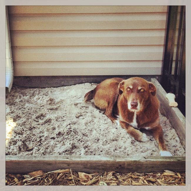 9 creative ways to cool your dog.                                                                                                                                                     More