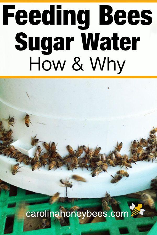 Feeding Bees Sugar Water How Why Feeding Bees Bee Hives Diy Bee Facts