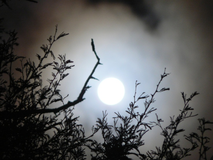 full moon in the bosveld