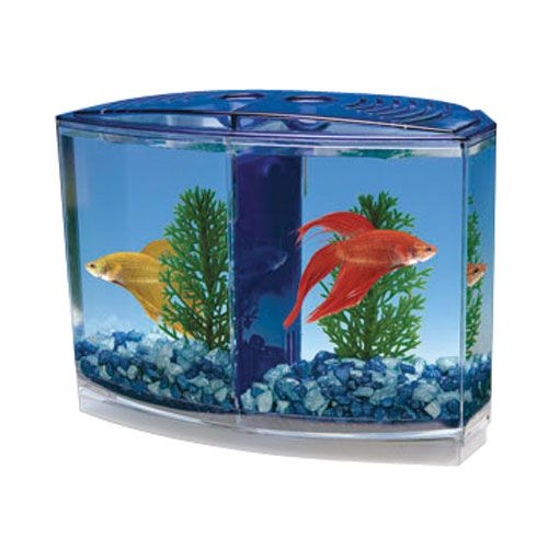 Betta bowfront double tank kit the simese fighting fish for Betta fish filter