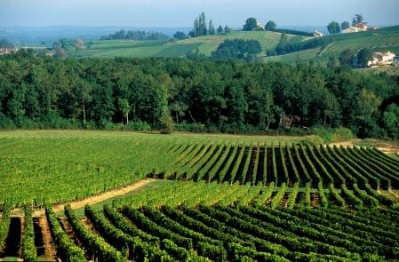 Pécharmant -  Bergerac - France  Cépages : cabernets (franc et sauvignon) et  merlot