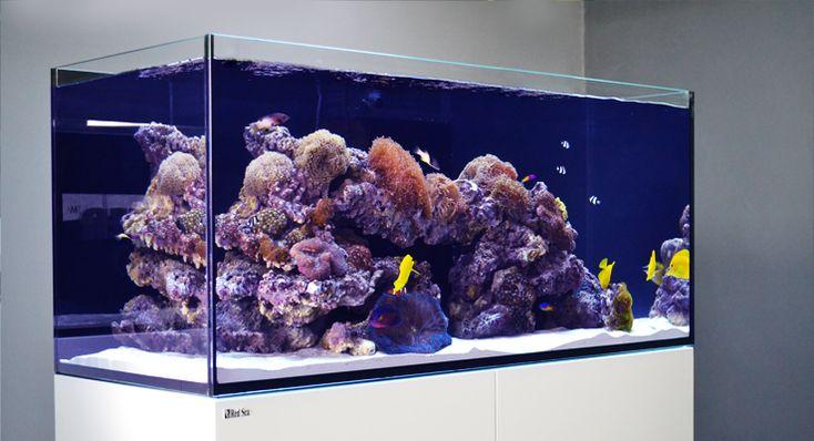red sea reefer aquarium Rimless design