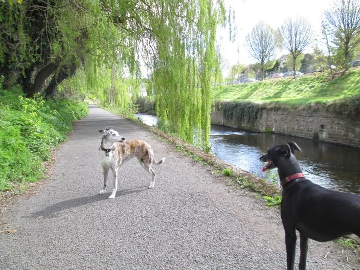 Toni and Winnie at The Dodder River...their morning pre-workshop stroll.