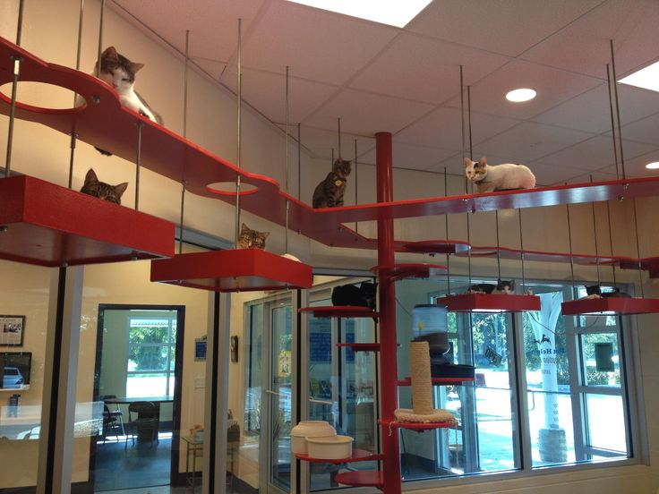 cat walk...No Way! This is crazy, and I love it!
