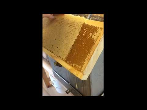 Honningen er her | Kultursenter