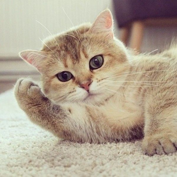 Аву, картинки с надписью моему котенку