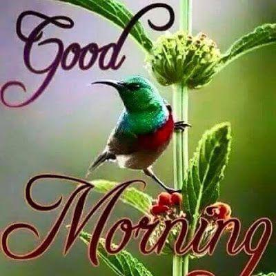 Good Morning good morning good morning quotes good morning sayings good morning image quotes | Good morning images, Latest good morning images, Latest good morning