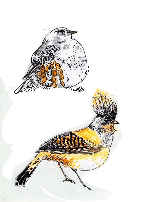 Dessins oiseaux