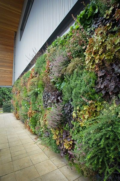 Live Enviro-Wall colourful statement wall