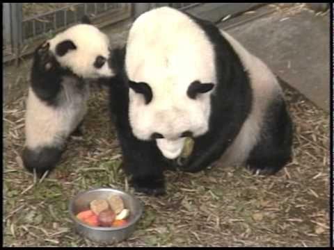 ★上野動物園パンダヒストリー
