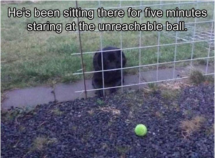 Funny Animal Pictures Of The Day – 23 Pics #funnypics #funny #lol