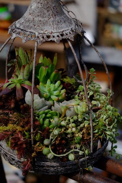 beautiful ideas for container gardening with succulents