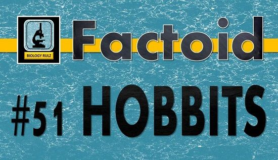 The #Hobbits were a distinct species of #humans that went extinct some 50,000 years ago. Remains of #Homo #floresiensis were first discovered in 2003 on the island of #Flores in #Indonesia. Scientists have estimated that the diminutive humans reached heights of not more than about 3-feet 7-inches (1.1 m).  #anthropology #archaeology #genetics #ancient #erectus #sapiens