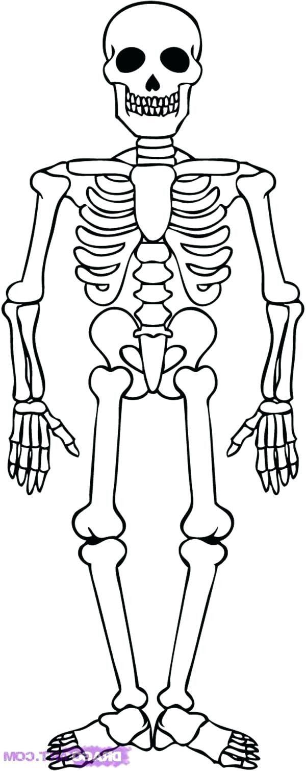 Pin By Petra Jiraskova On Lesni Klub Skeleton Drawing Skeleton Drawing Easy Skeleton Drawings