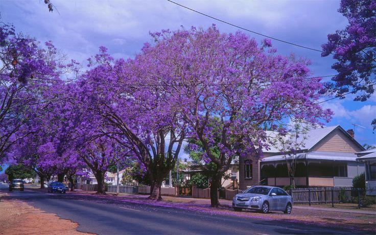 Grafton NSW