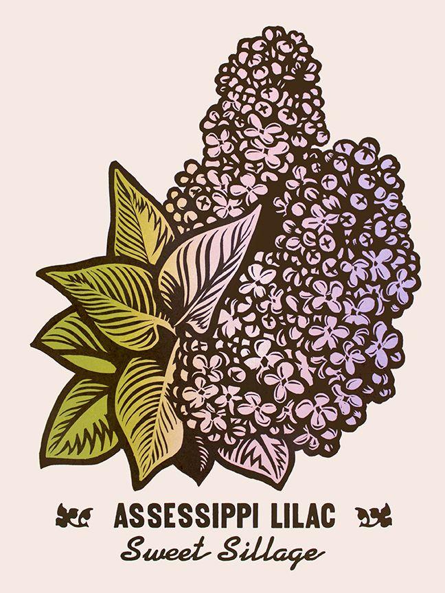 Martin Mazorra Lilac Woodcut and Letterpress Flower Print
