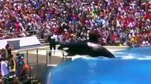 Смотрите что вытворяют делфины! Интересное видео! » Смотреть онлайн новинки фильмов и видео в хорошем качестве бесплатно