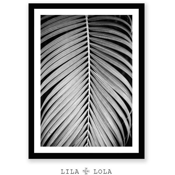 Palm Leaf Print, Plant Photo, Black and White Wall Art, Large Tropical... (825 ALL) ❤ liked on Polyvore featuring home, home decor, wall art, black white poster, black and white home accessories, photo poster, black and white wall art and black and white photo posters