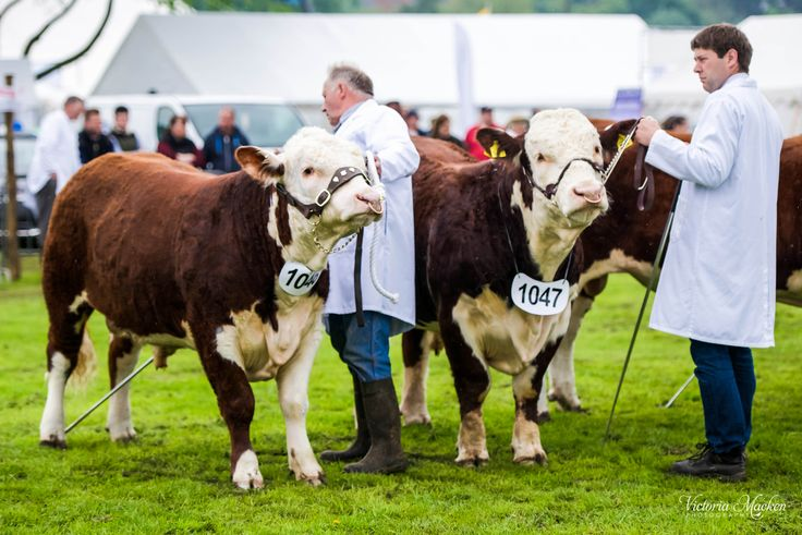 Shropshire County Show 2014 One of the oldest surviving agricultural shows in the county. #ShropshireEngland