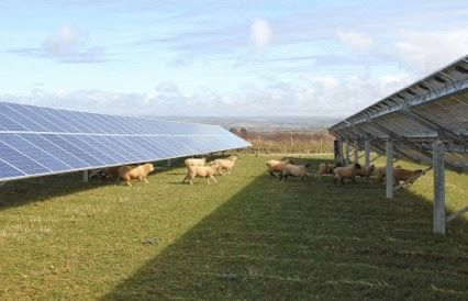 Sheep grazing under solar modules. Actually some solar parks are designed with a minimum lee of 80 cm to allow sheeps to walk under the modules and avoiding possible jumping on it.