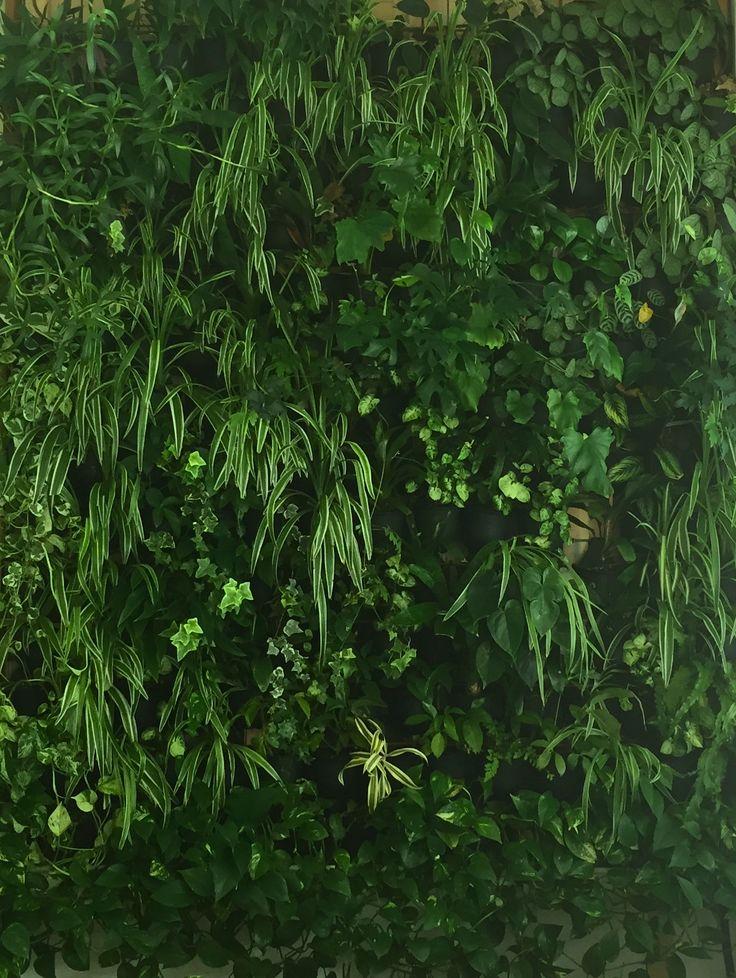 Atmosphy Green Wall www.atmosphy.com.au