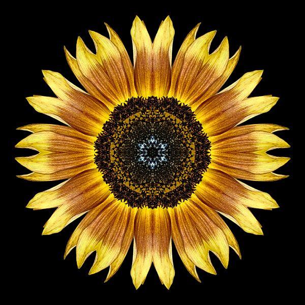 Flower Mandalas: Yellow and Brown Sunflower I   Sunflower ...