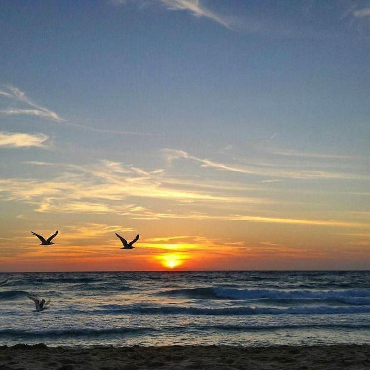 Buona serata dalla spiaggia della #biodola a #portoferraio nello scatto di @londoneye11. Continuate a taggare le vostre foto con #isoladelbaapp il tag delle vostre vacanze all'#isoladelba. http://ift.tt/1NHxzN3